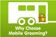 Why Choose  Mobile Grooming?